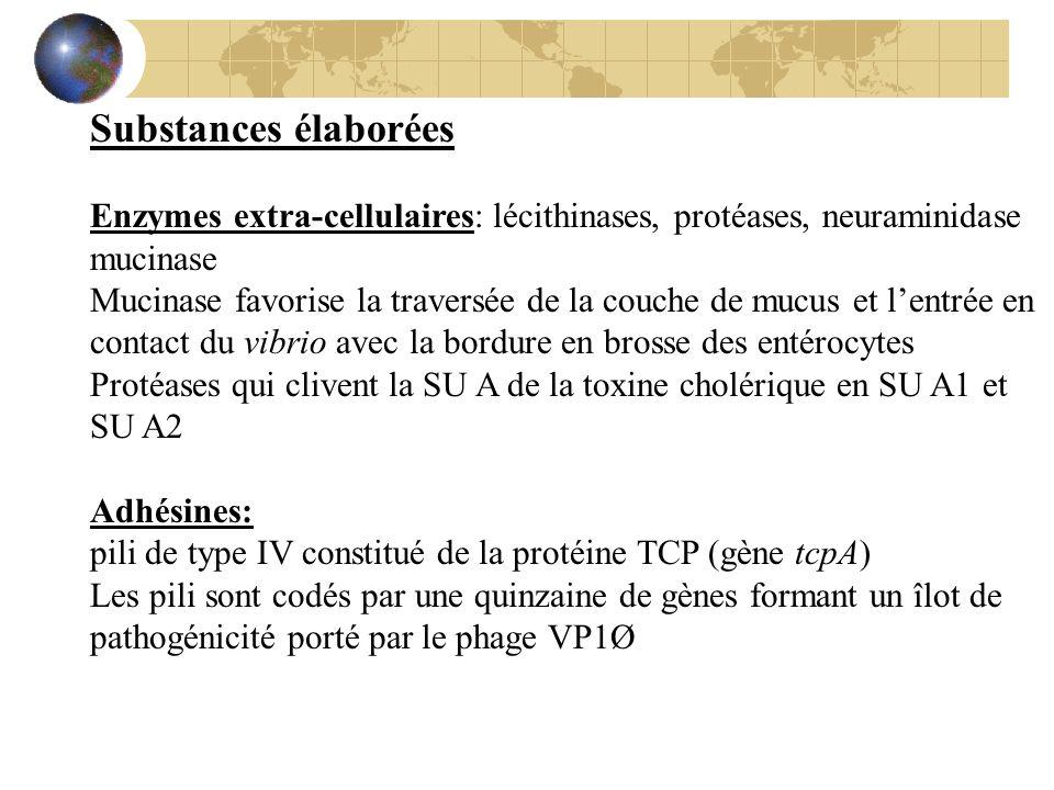 Substances élaborées Enzymes extra-cellulaires: lécithinases, protéases, neuraminidase. mucinase.