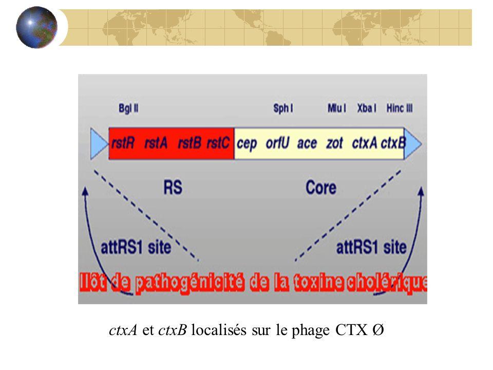 ctxA et ctxB localisés sur le phage CTX Ø