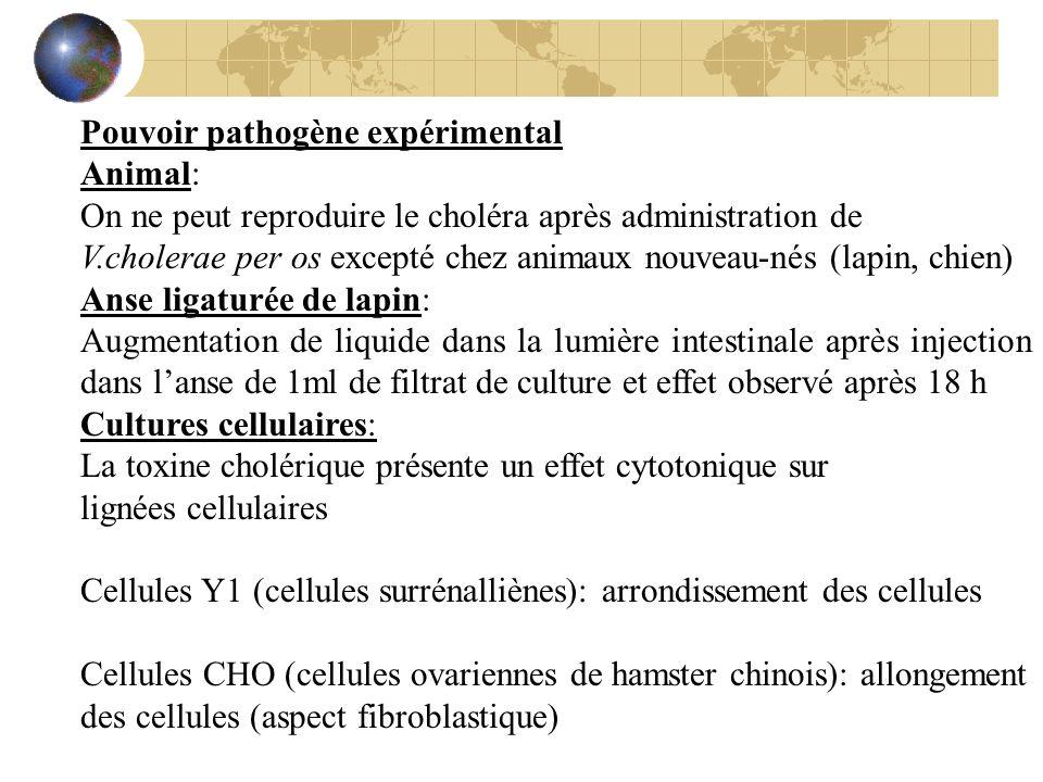 Pouvoir pathogène expérimental