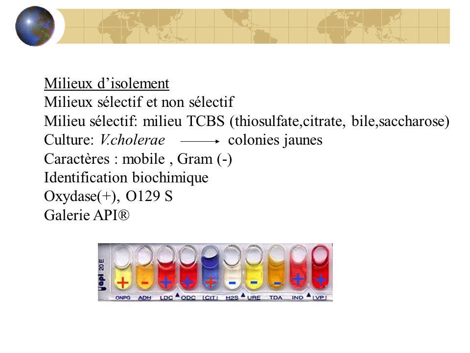 Milieux d'isolementMilieux sélectif et non sélectif. Milieu sélectif: milieu TCBS (thiosulfate,citrate, bile,saccharose)
