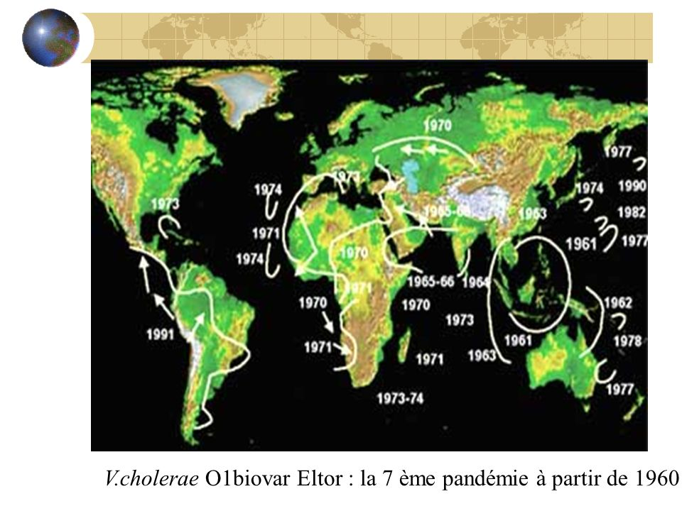V.cholerae O1biovar Eltor : la 7 ème pandémie à partir de 1960