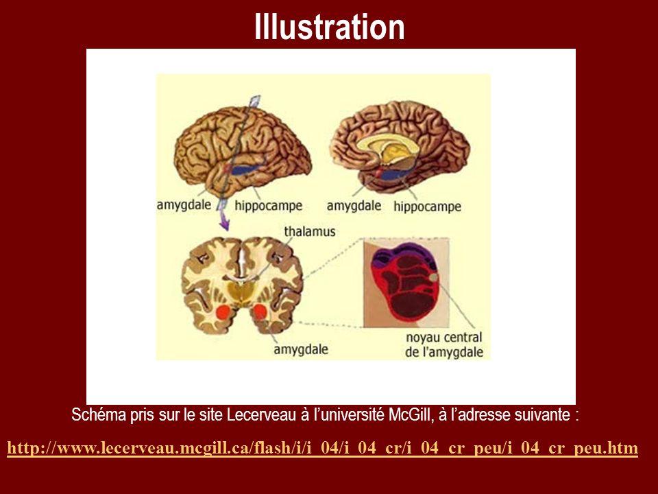 Illustration Schéma pris sur le site Lecerveau à l'université McGill, à l'adresse suivante :