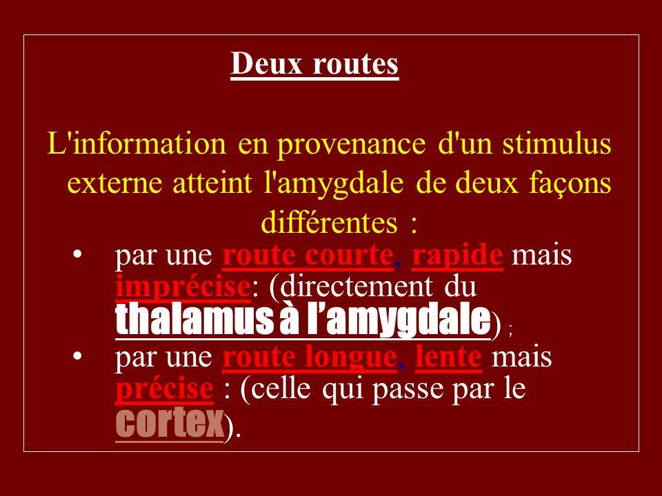Deux routes L information en provenance d un stimulus externe atteint l amygdale de deux façons différentes :