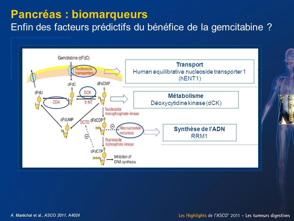 Pancréas : biomarqueurs Enfin des facteurs prédictifs du bénéfice de la gemcitabine
