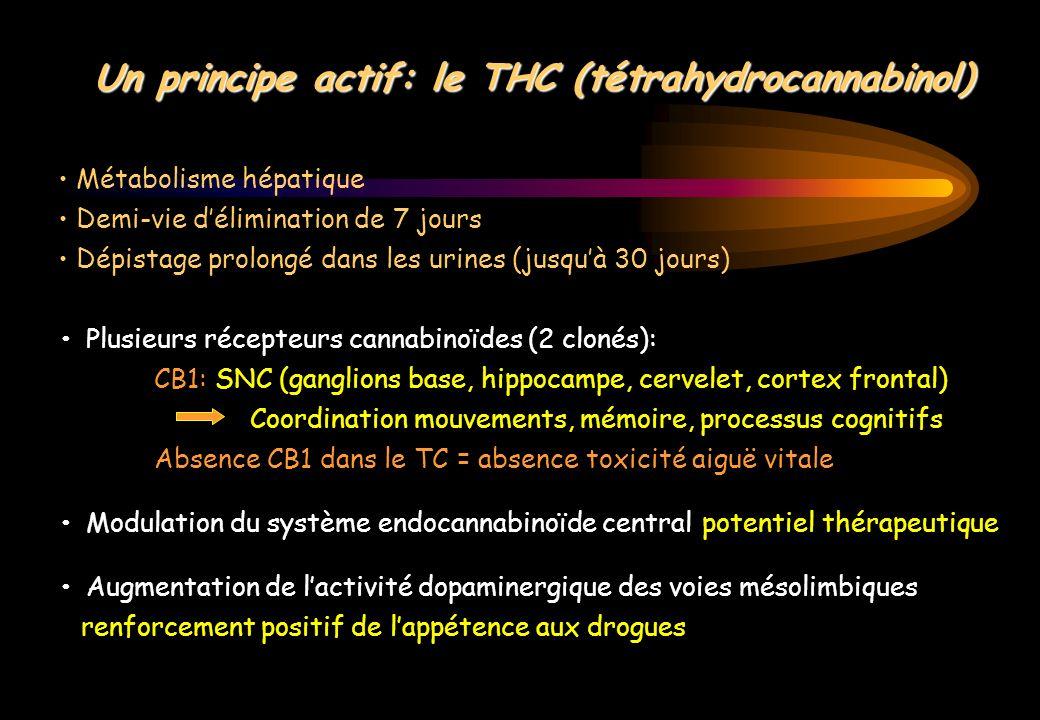 Un principe actif: le THC (tétrahydrocannabinol)