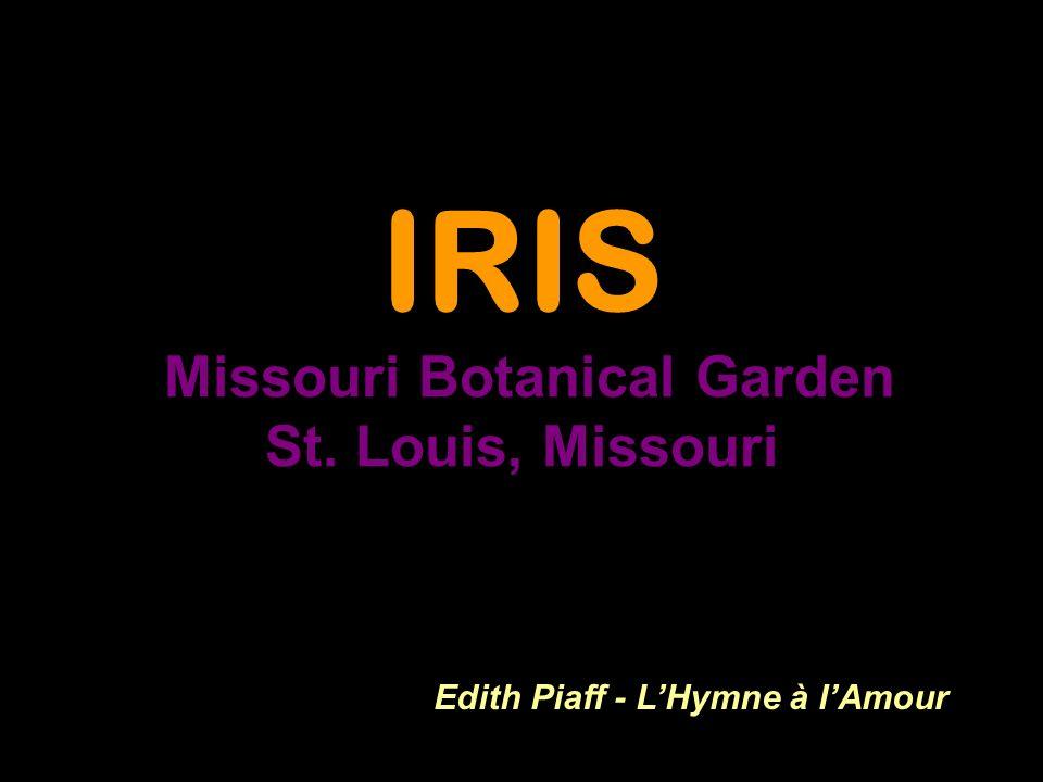 IRIS Missouri Botanical Garden St. Louis, Missouri