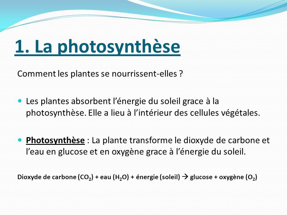 1. La photosynthèse Comment les plantes se nourrissent-elles