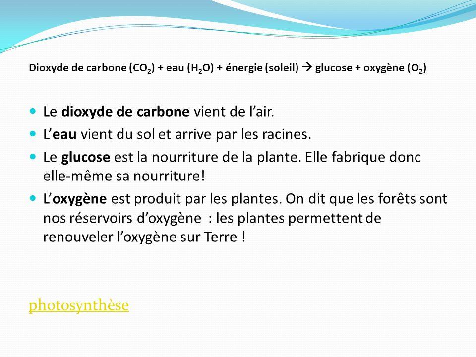 Le dioxyde de carbone vient de l'air.