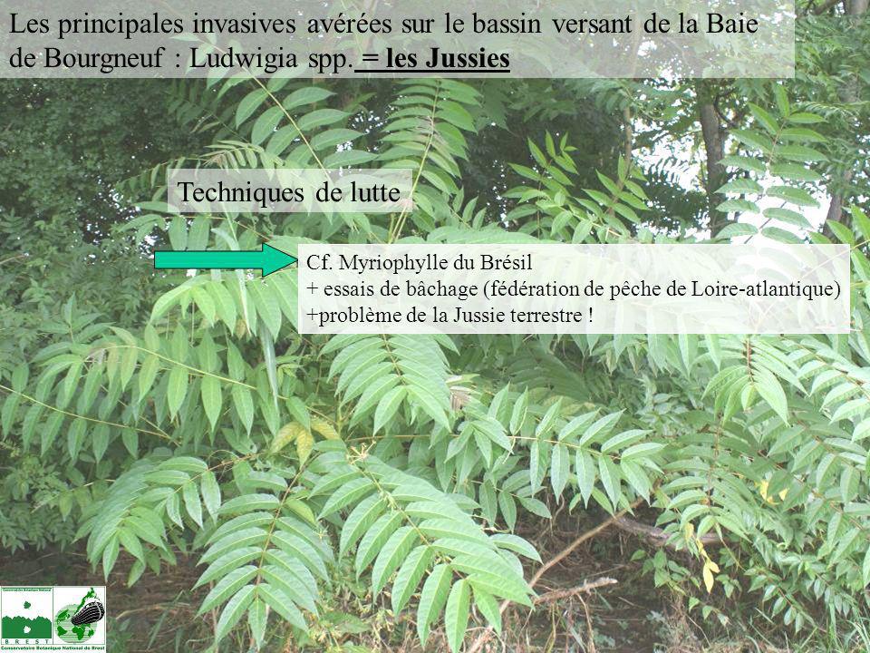Les principales invasives avérées sur le bassin versant de la Baie de Bourgneuf : Ludwigia spp. = les Jussies