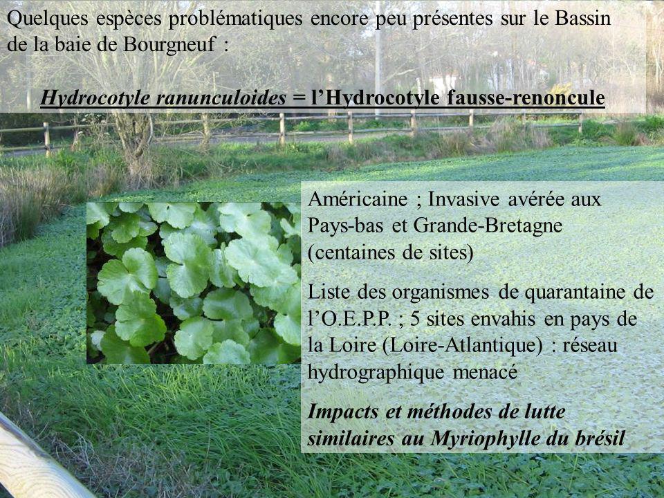 Quelques espèces problématiques encore peu présentes sur le Bassin de la baie de Bourgneuf :