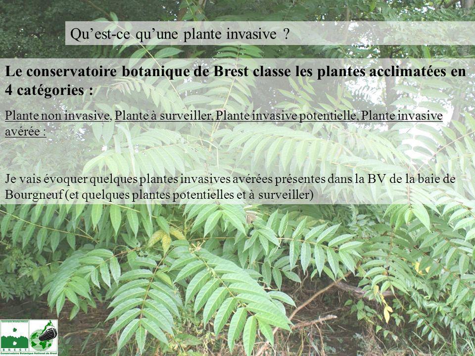 Qu'est-ce qu'une plante invasive