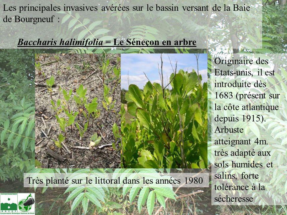 Les principales invasives avérées sur le bassin versant de la Baie de Bourgneuf :