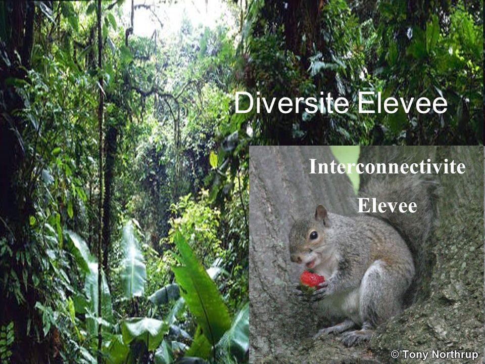 Diversite Elevee Interconnectivite Elevee