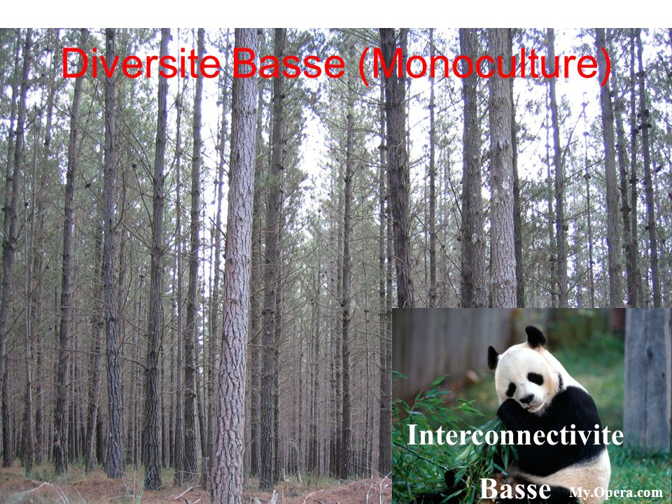 Diversite Basse (Monoculture)
