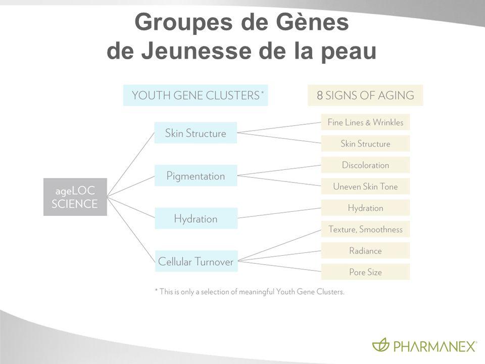 Groupes de Gènes de Jeunesse de la peau