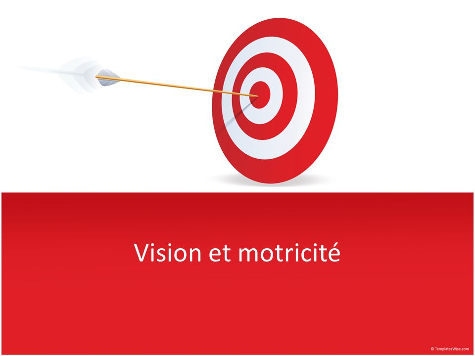 Vision et motricité
