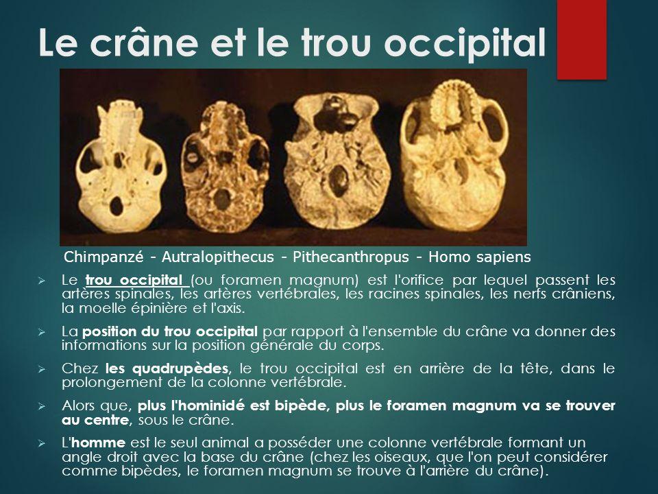 comment savoir qu 39 un squelette fossile tait bip de ppt t l charger. Black Bedroom Furniture Sets. Home Design Ideas