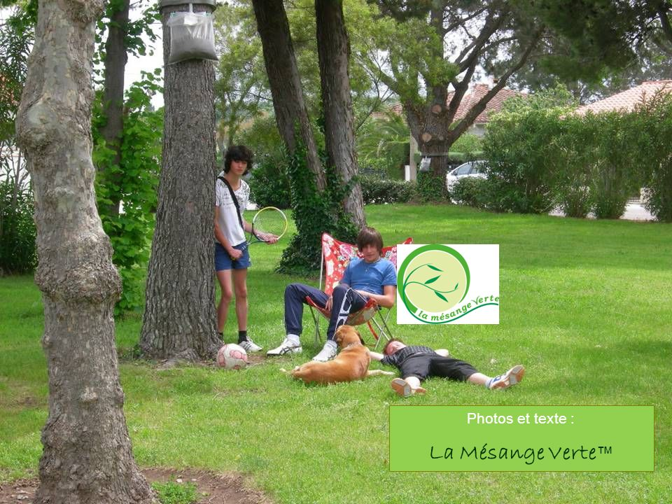 Photos et texte : La Mésange Verte™