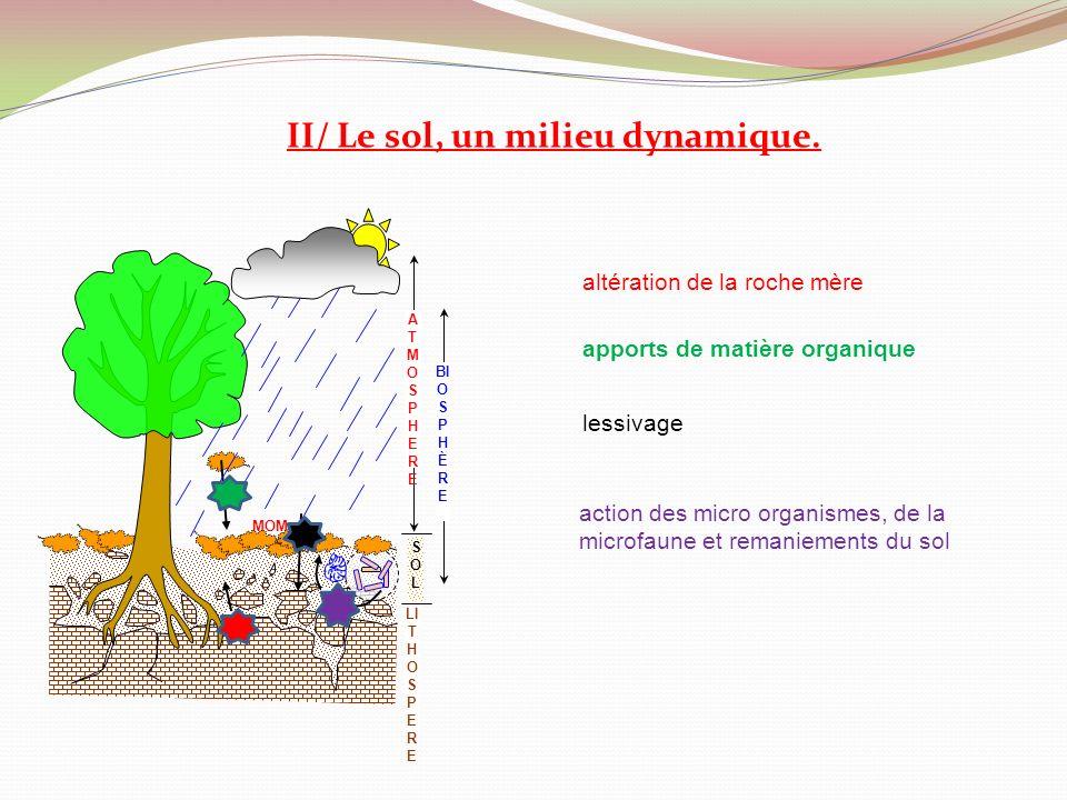 II/ Le sol, un milieu dynamique.