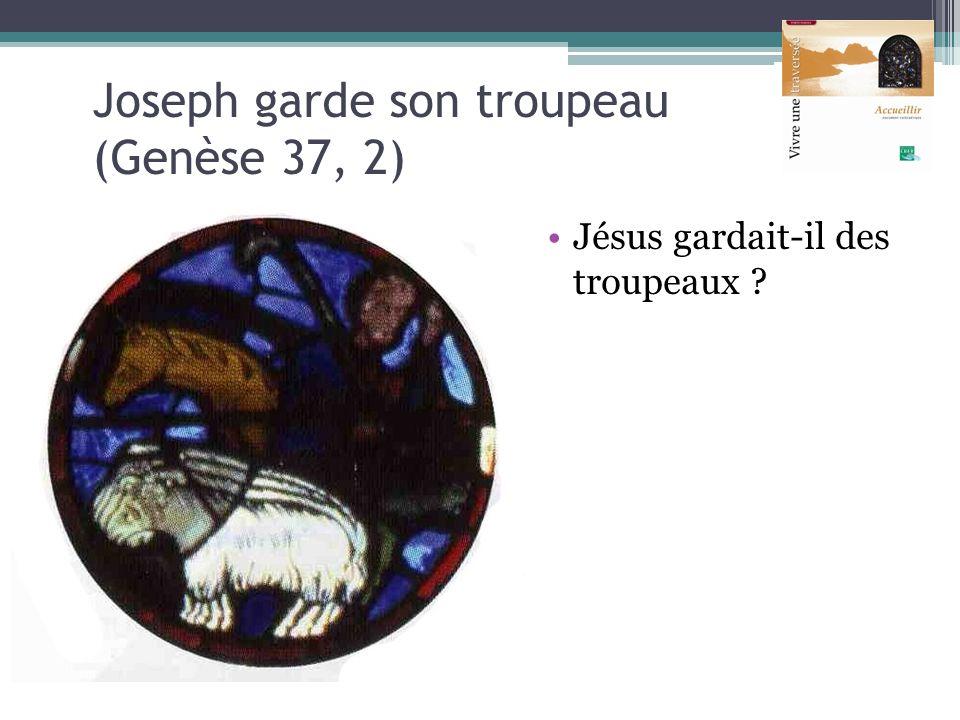 Joseph garde son troupeau (Genèse 37, 2)