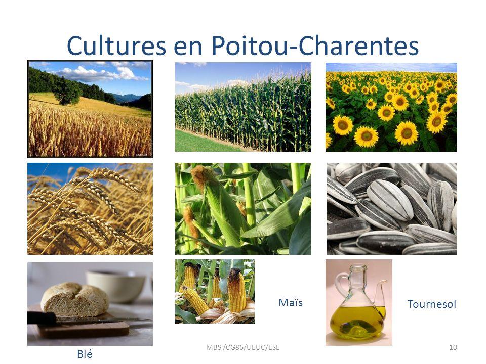 Cultures en Poitou-Charentes
