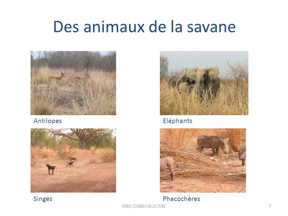 Des animaux de la savane