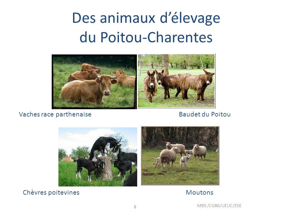 Des animaux d'élevage du Poitou-Charentes
