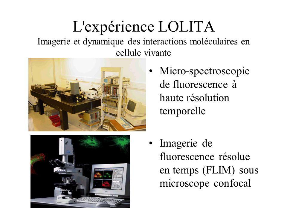 L expérience LOLITA Imagerie et dynamique des interactions moléculaires en cellule vivante