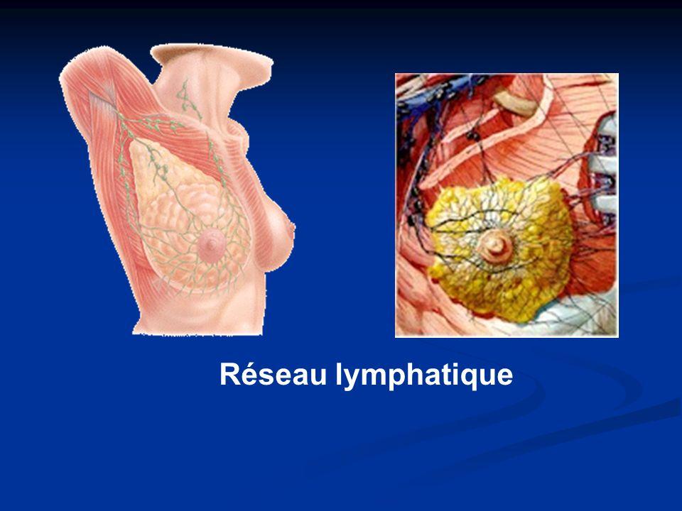 Réseau lymphatique