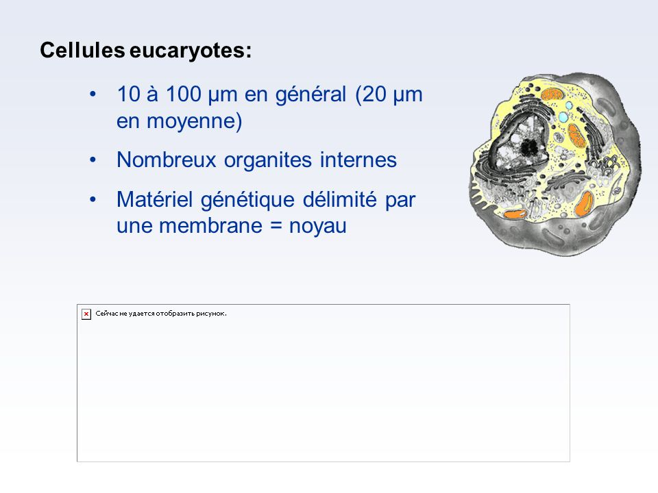 Cellules eucaryotes: 10 à 100 µm en général (20 µm en moyenne) Nombreux organites internes.