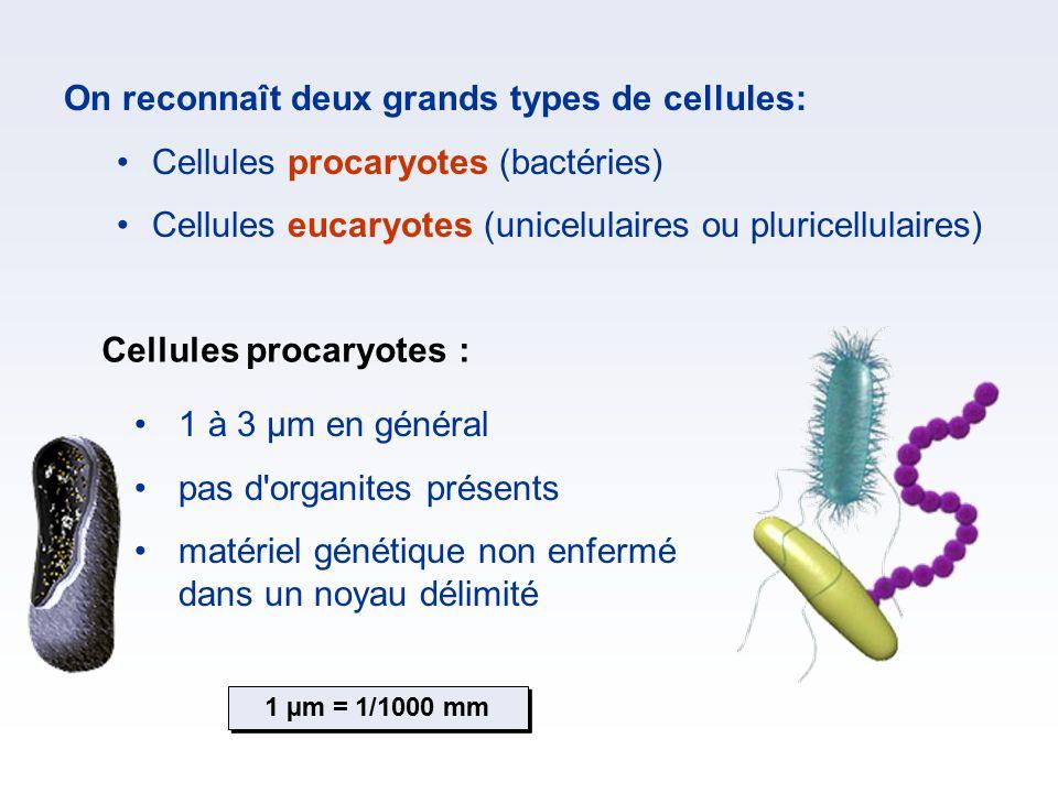 On reconnaît deux grands types de cellules: