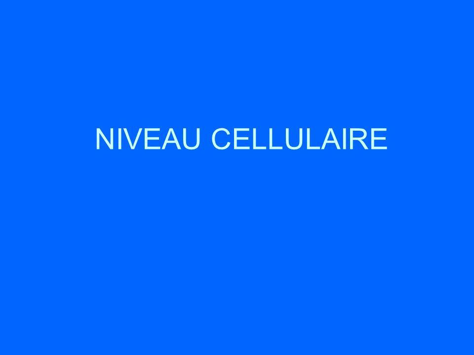 NIVEAU CELLULAIRE