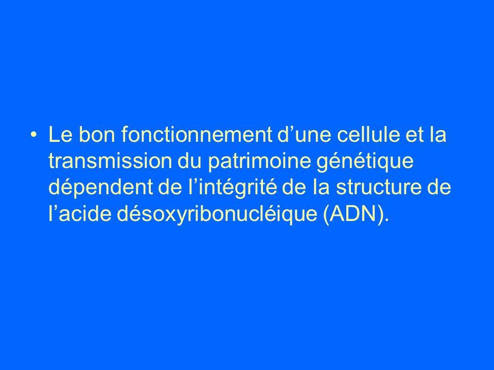 Le bon fonctionnement d'une cellule et la transmission du patrimoine génétique dépendent de l'intégrité de la structure de l'acide désoxyribonucléique (ADN).