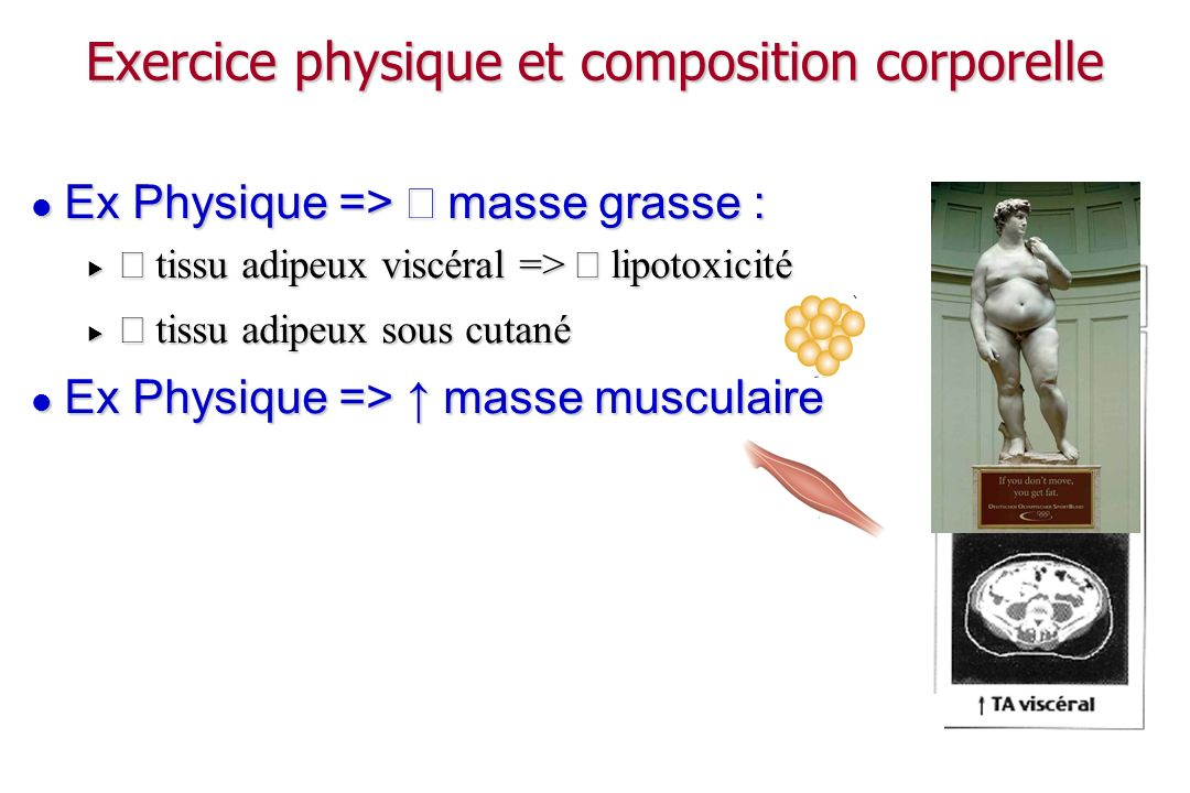 Exercice physique et composition corporelle
