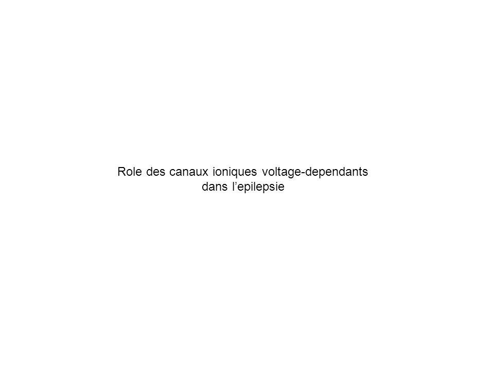 Role des canaux ioniques voltage-dependants