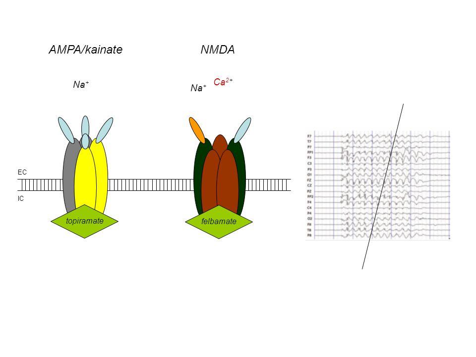 AMPA/kainate NMDA Na+ Ca2+ Na+ EC IC topiramate felbamate