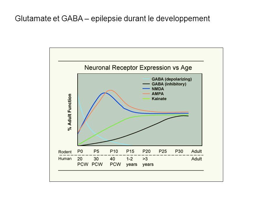 Glutamate et GABA – epilepsie durant le developpement