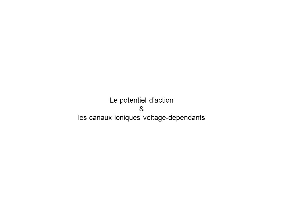 les canaux ioniques voltage-dependants