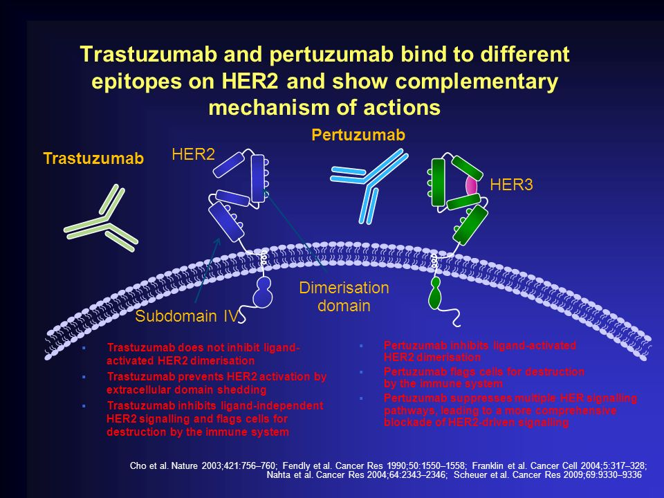 Trastuzumab and pertuzumab bind to different epitopes on HER2 and show complementary mechanism of actions