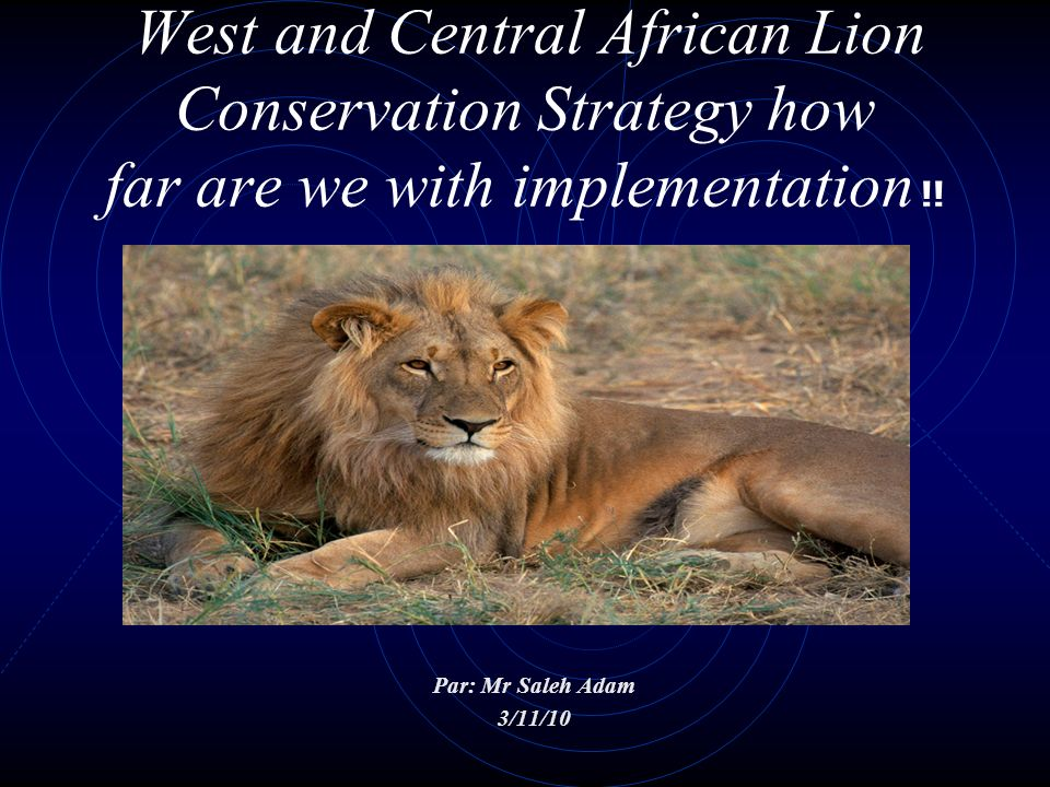 West and Central African Lion Conservation Strategy how far are we with implementation !!