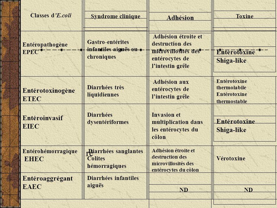 ré Adhésion Entérotoxine Shiga-like Entérotoxinogène ETEC