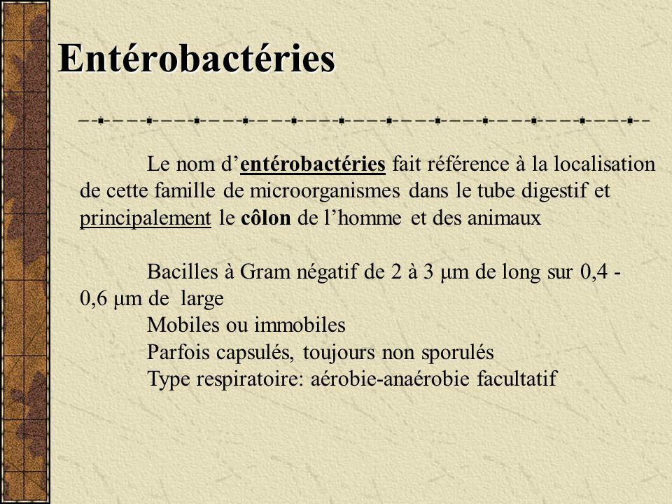 Entérobactéries