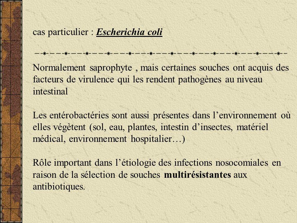 cas particulier : Escherichia coli