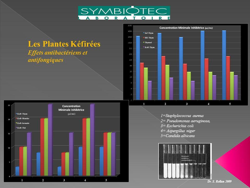 Les Plantes Kéfirées Effets antibactériens et antifongiques