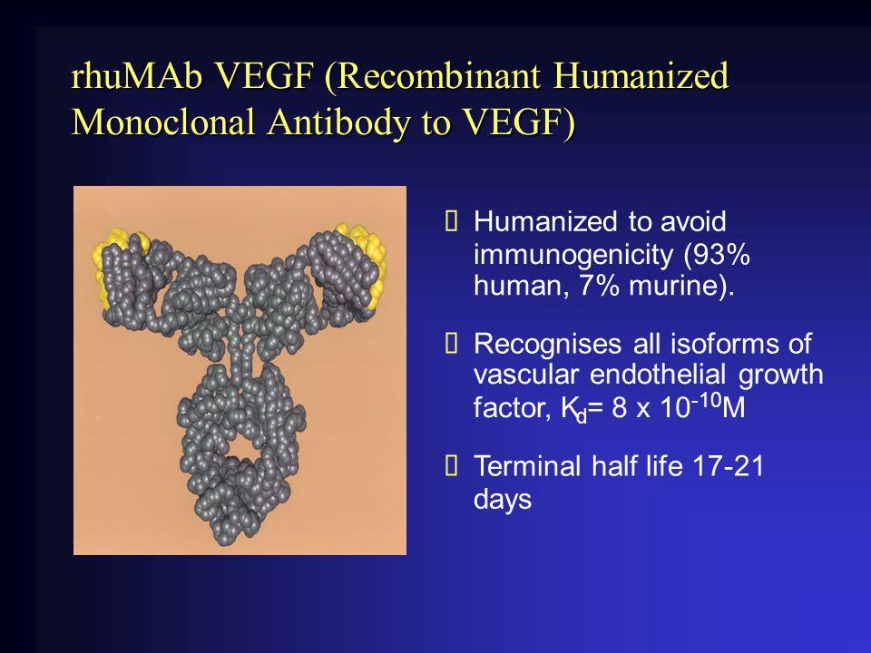 rhuMAb VEGF (Recombinant Humanized Monoclonal Antibody to VEGF)