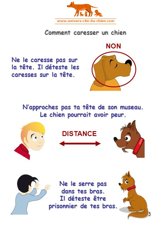 NON DISTANCE Comment caresser un chien