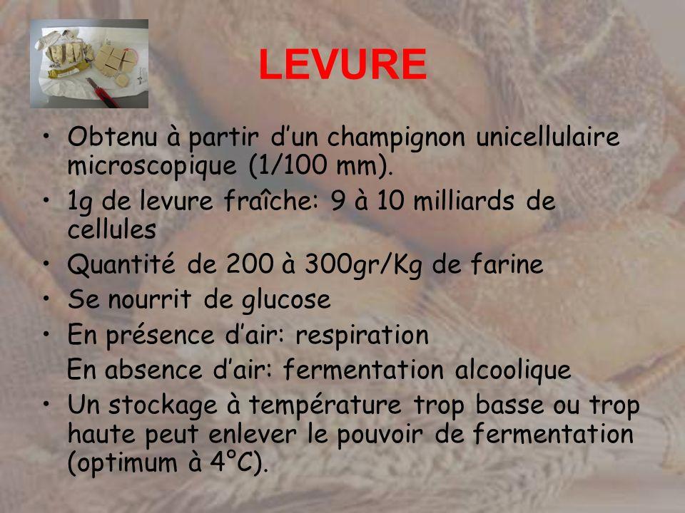 LEVURE Obtenu à partir d'un champignon unicellulaire microscopique (1/100 mm). 1g de levure fraîche: 9 à 10 milliards de cellules.