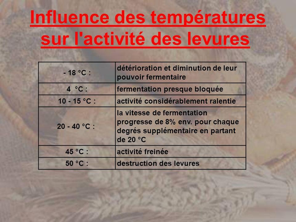 Influence des températures sur l activité des levures