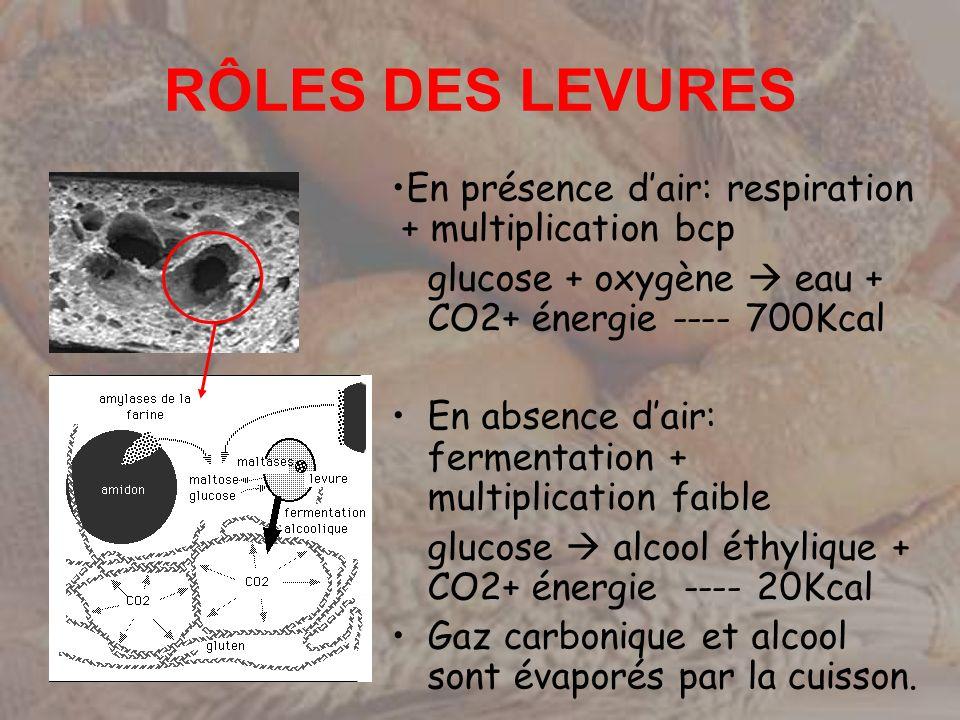 RÔLES DES LEVURES En présence d'air: respiration + multiplication bcp