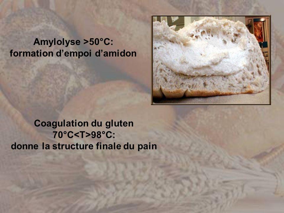 Amylolyse >50°C: formation d'empoi d'amidon